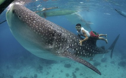 1. Swim with Whale Sharks in