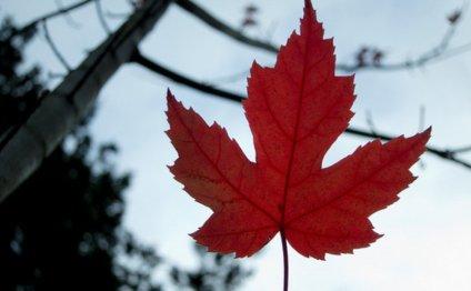 Canada visa for filipinos